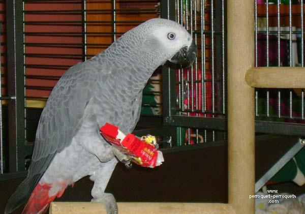 Diff rents jouets diff rentes activit s pour perroquets - Construire des jouets en bois gratuit ...