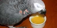 Centre aviaire johanne vaillancourt l 39 alimentation des for Comment conserver les aliments