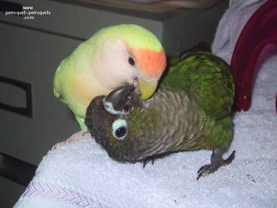 Le Perroquet Un Obsede Sexuel