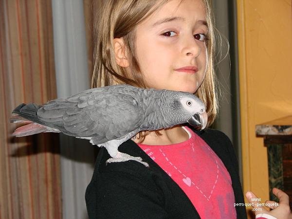 comment apprendre a un oiseau a manger seul