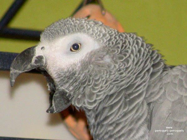 perroquet-autonome-2