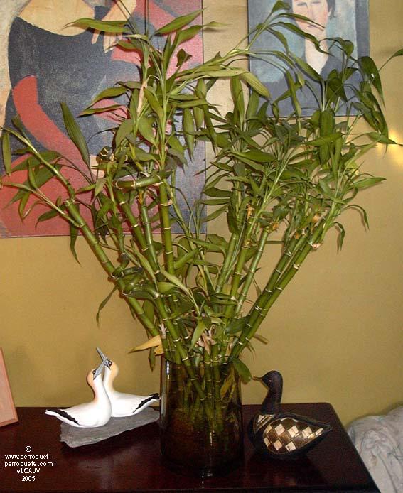 le bambou et les perroquets par johanne vaillancourt. Black Bedroom Furniture Sets. Home Design Ideas