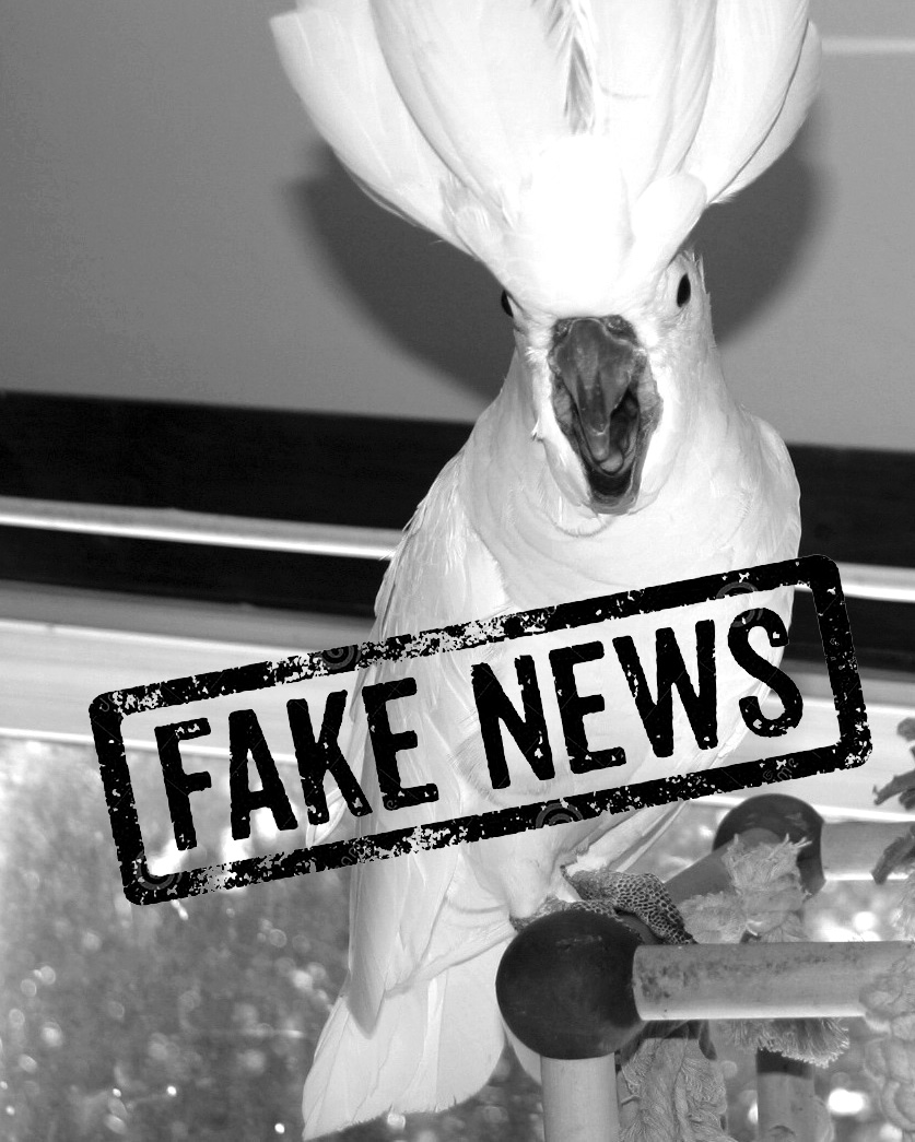 faux, pas de dominance chez les perroquets